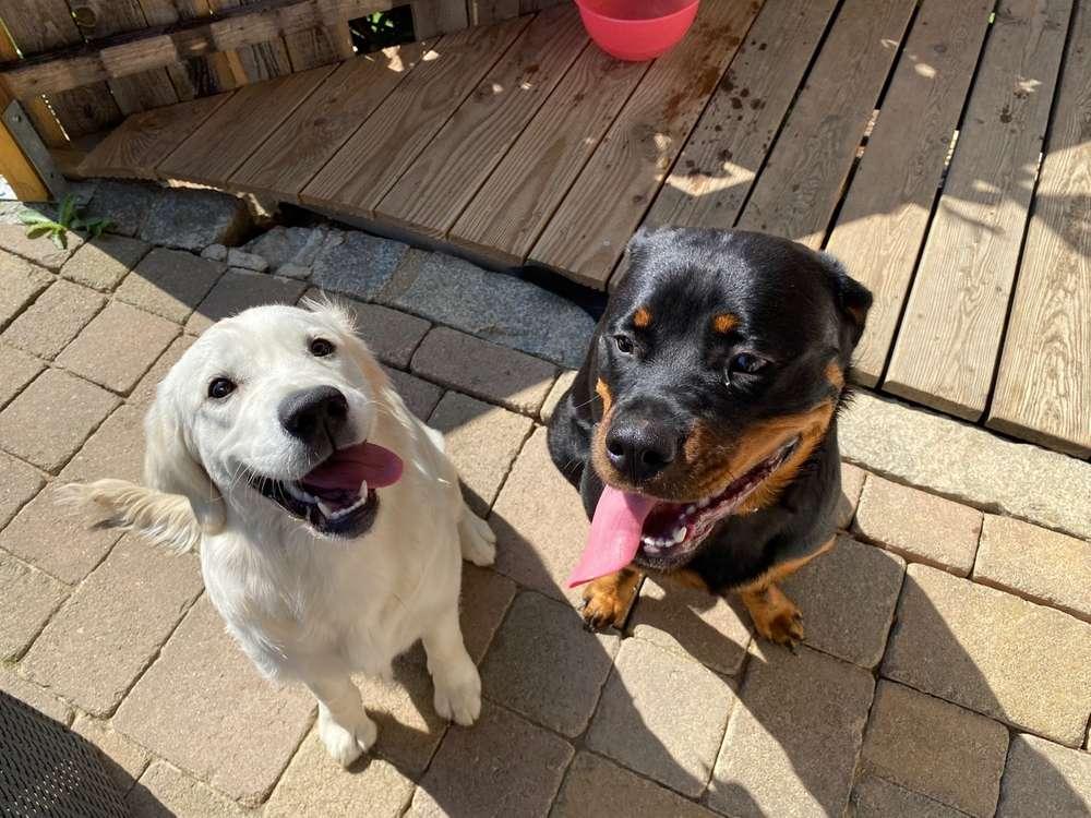 Bester Freund, Hundekumpel - zeigt her!