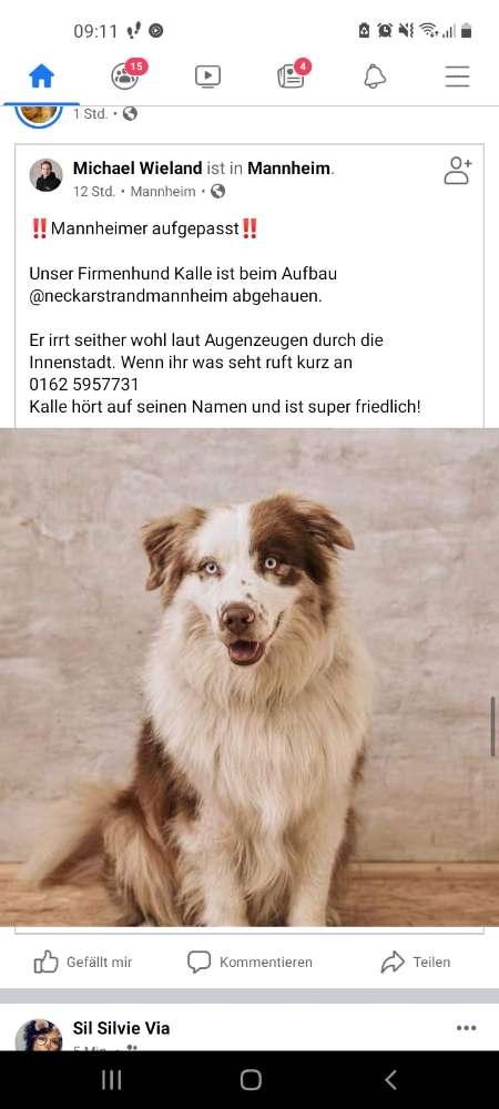 Hund Platzhalter