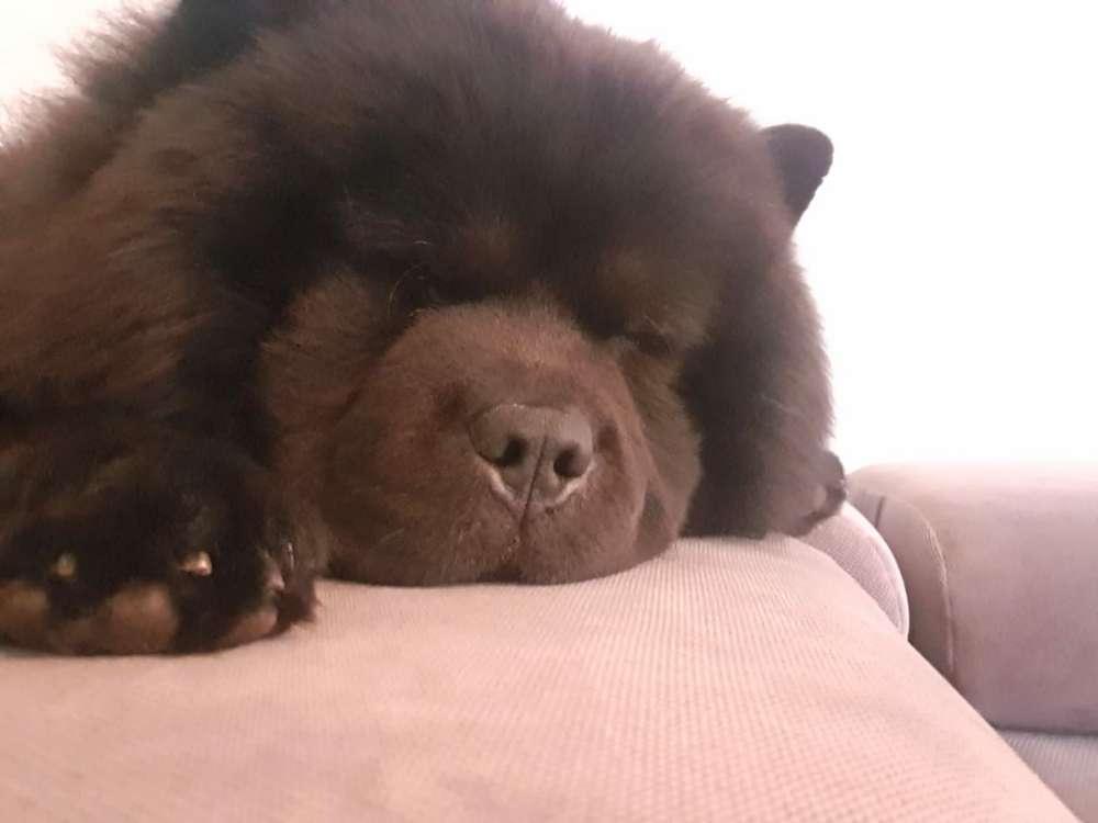 Hunde beim schlafen